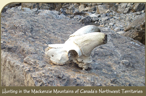 Association of Mackenzie Mountains Outfitters; Hunting NWT